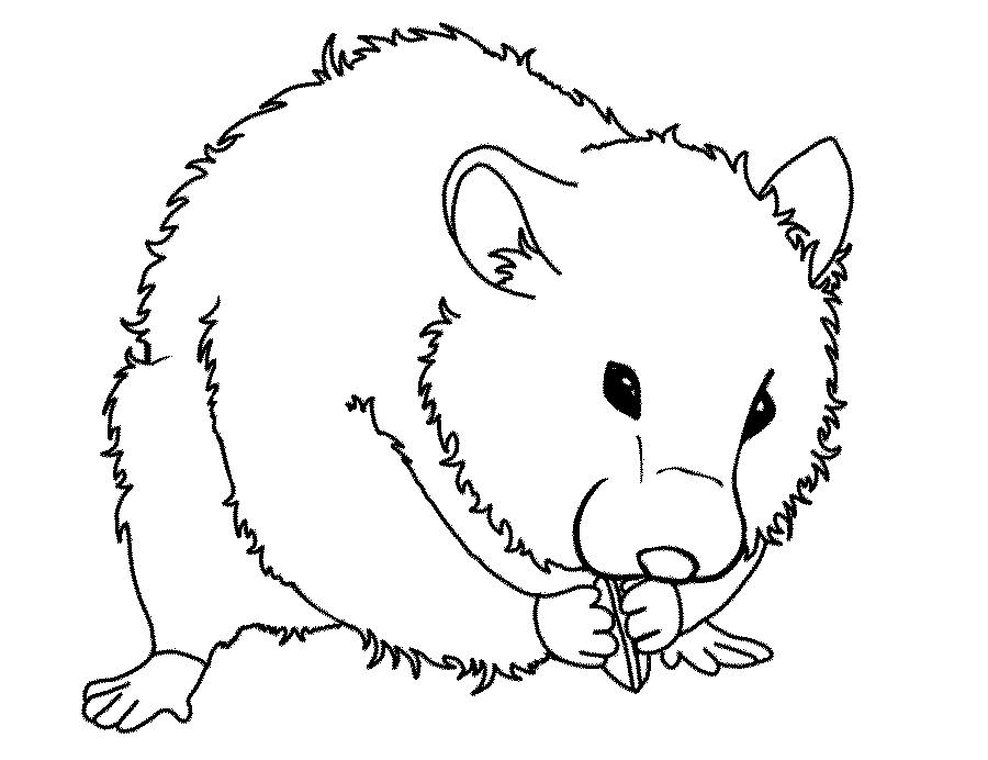 Dibujos para colorear de h msters colorear im genes for Hamster coloring pages printable