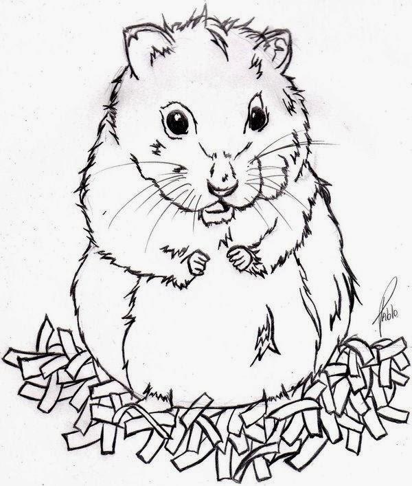 Dibujos Para Colorear De Hamsters Colorear Imagenes