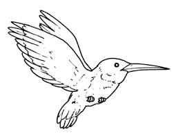 colibrí.jpg1