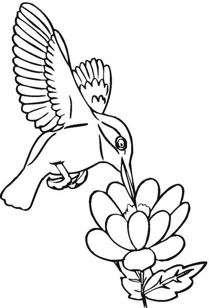 colibrí.jpg3