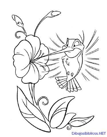 Hermosos colibríes para imprimir y pintar | Colorear imágenes
