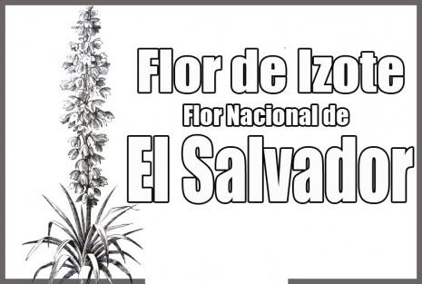 florelsalvador
