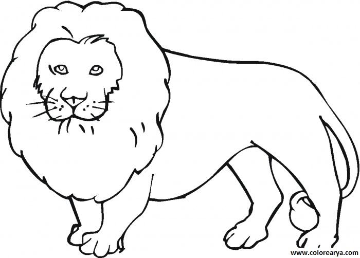 dibujos de leones salvajes para imprimir y pintar colorear im genes. Black Bedroom Furniture Sets. Home Design Ideas