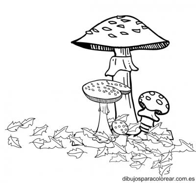 dibujo-frutas-y-hortalizas-de-otono.jpg3