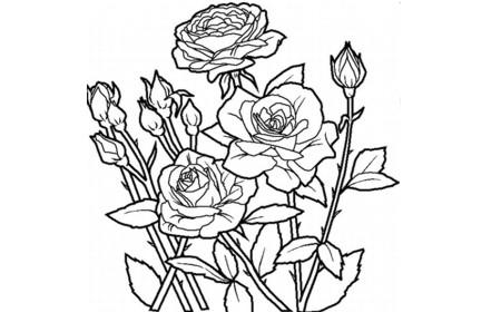 zdiabujos-para-el-dia-de-la-mujer-para-colorear-Dibujos-de-rosas-para-colorear