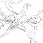 Dibujos del Día Mundial de las Aves Migratorias para pintar