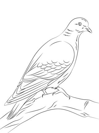 aves migratorias.jpg1