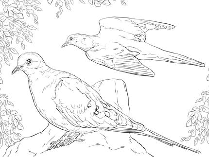 aves migratorias.jpg2