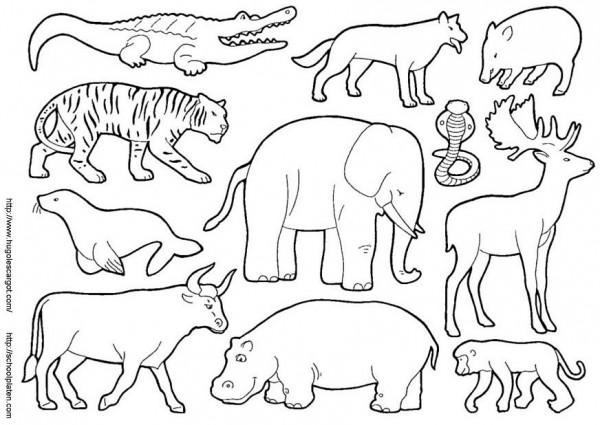 dibujos-de-animales-13163