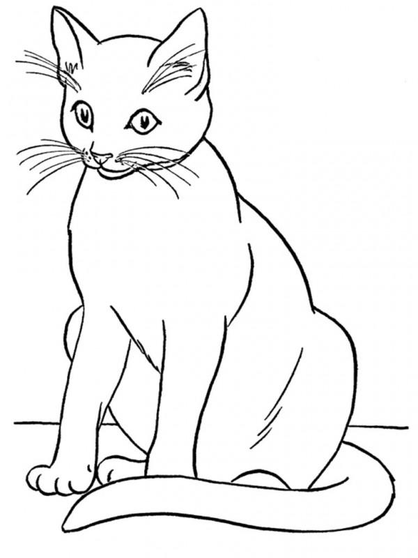 Dibujos De Gatitos Simpáticos Para Colorear Colorear Imágenes