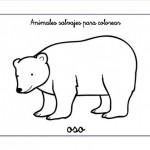 Dibujos de osos salvajes para pintar