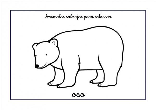 oso-colorear
