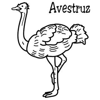 avestruz-dibujo infantil