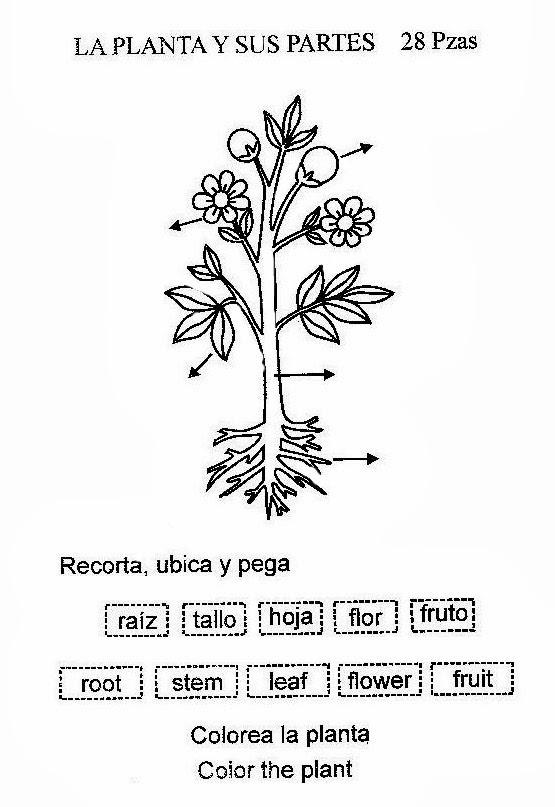 Partes De Las Plantas Para Pintar in addition Gusano Lombriz likewise Cerdito De Fondant moreover Los Escenarios Arrebatados moreover Simbolo. on imagenes de flores para dibujar