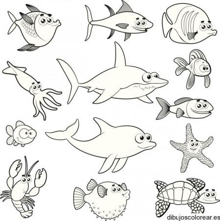 Dibujos De Animales Marinos Para Pintar Colorear Imagenes