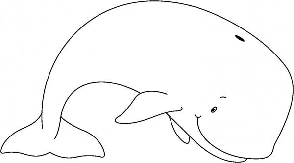 ballenas-8
