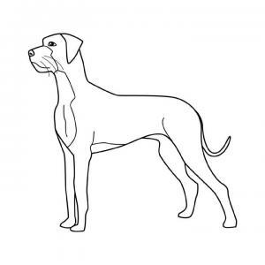dibujos-razas-perros-pintar