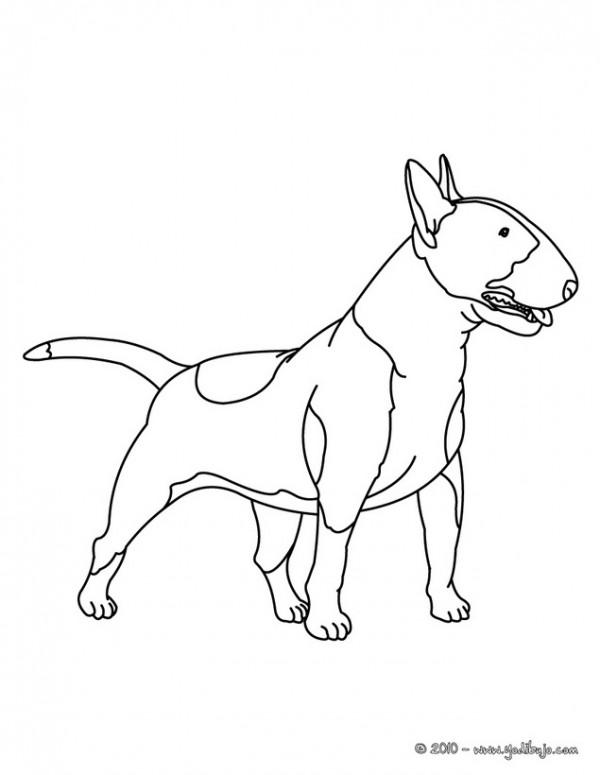 dog-16-01-ep8_gpr