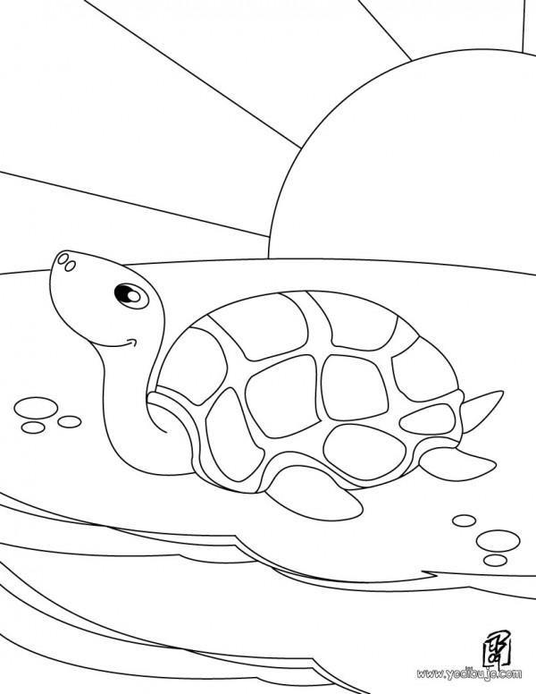 es-dibujo-tortuga-source_p0t