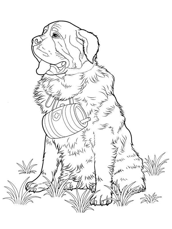 m-dibujos-razas-perros.html-6-6