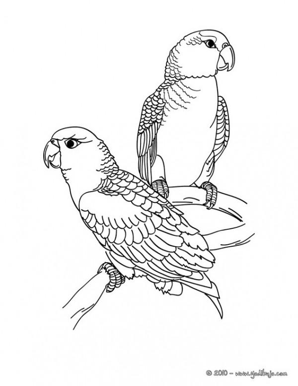 perroquet-1-01-f5p_9jg