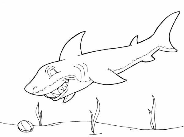 tiburon-feliz