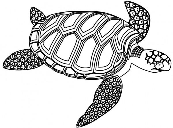Imagenes Animadas Para Colorear: Fotos De Tortugas Marinas Para Colorear