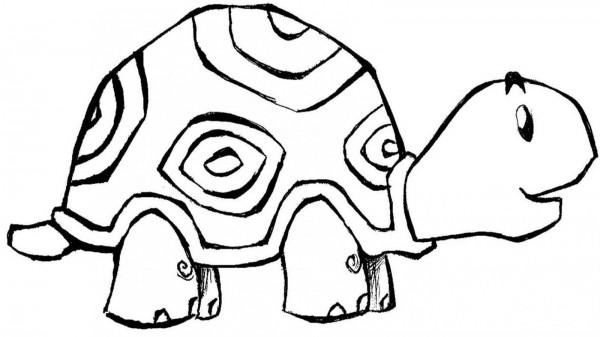 Im genes de tortugas para pintar