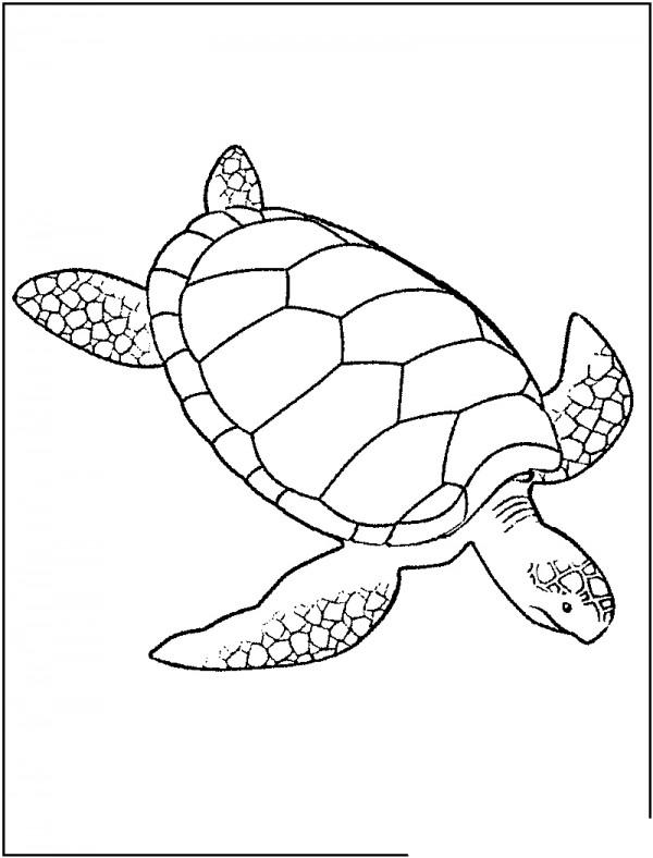 Fotos de tortugas marinas para colorear Colorear im genes