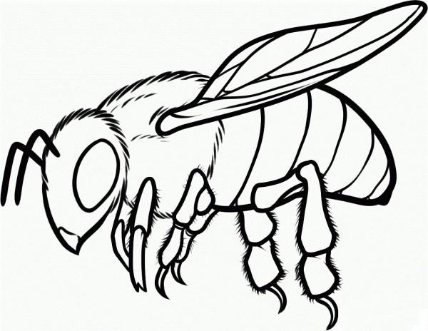 abeja-realista-para-colorear