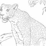 Imágenes para pintar de leopardos