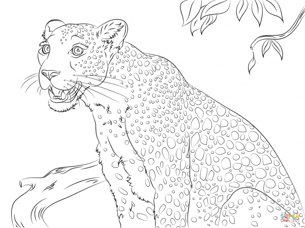 cute-leopard-coloring-pages