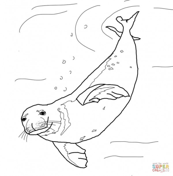 monk-seal-swimming-underwater-coloring-page