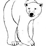 Fotos de oso polar para pintar