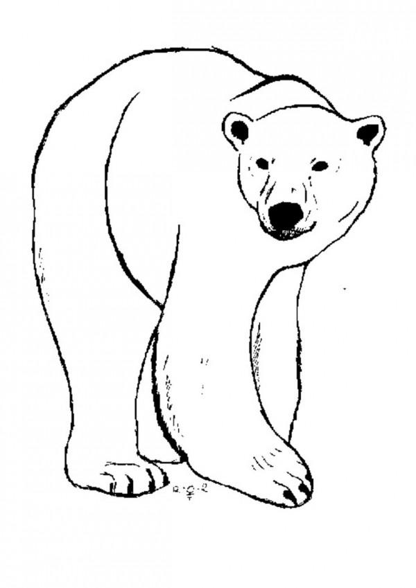 Fotos de oso polar para pintar | Colorear imágenes