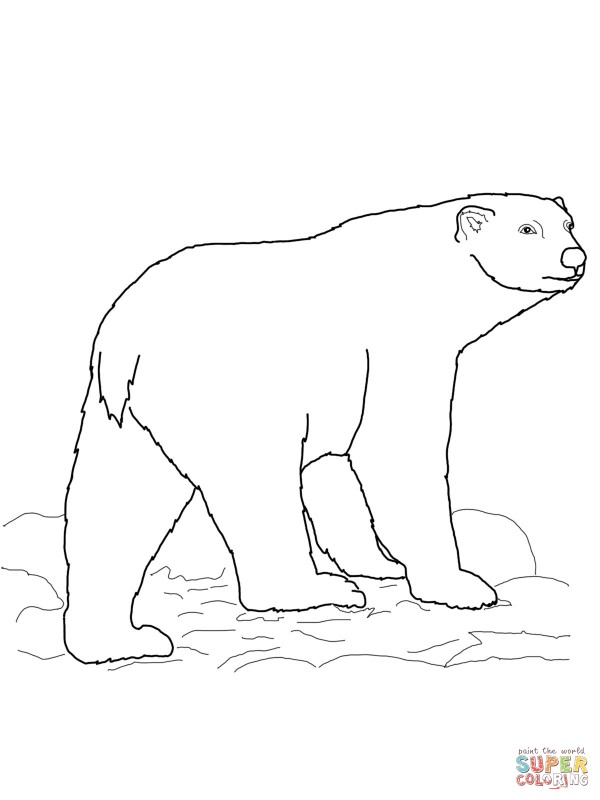 polar-bear-coloring-page