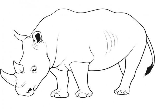 Im genes de rinocerontes para pintar Colorear im genes