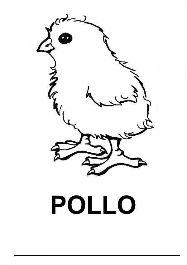 Imágenes de pollos para colorear | Colorear imágenes