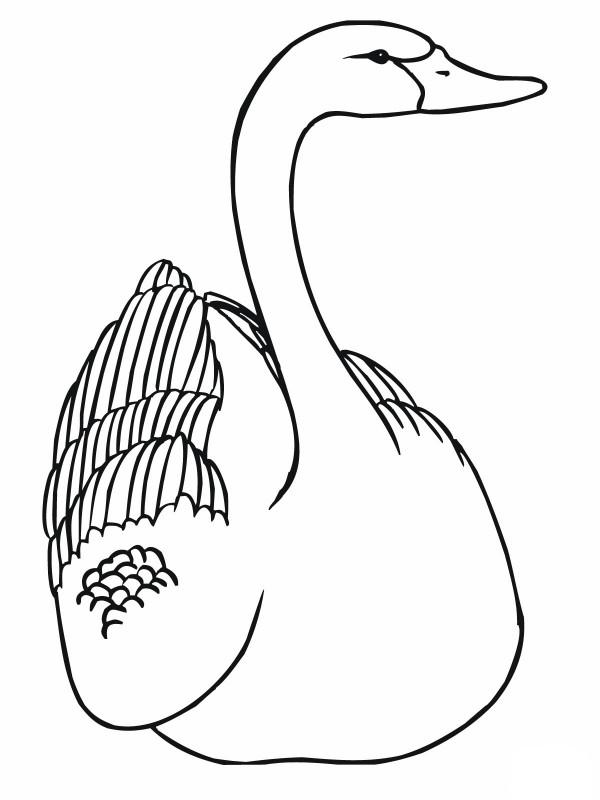 Im 225 Genes De Cisnes Para Colorear Colorear Im 225 Genes