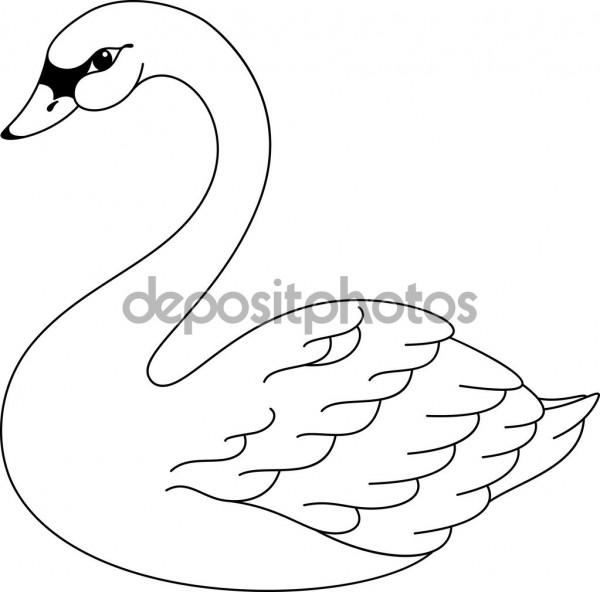 im225genes de cisnes para colorear colorear im225genes