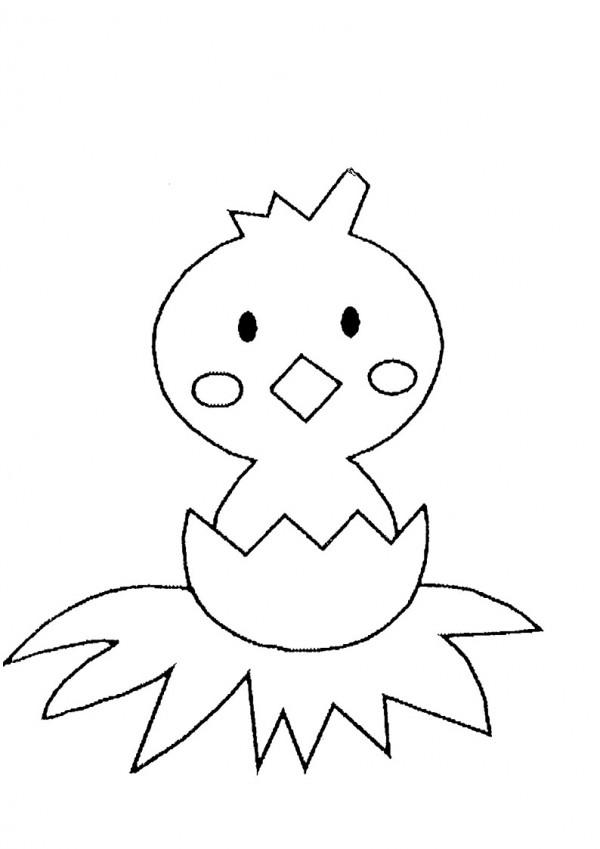 pollos6