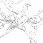 Dibujos de aves para imprimir y colorear