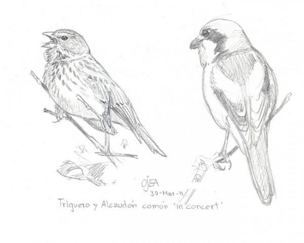 aves14 (4)
