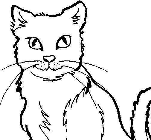 gato-colorear