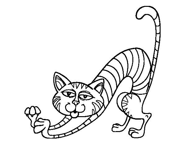 gato-haciendo-estiramientos-colorear