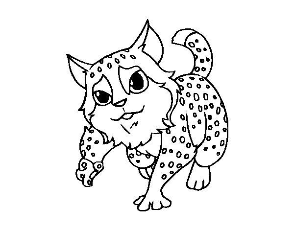 gato-montes-colorear