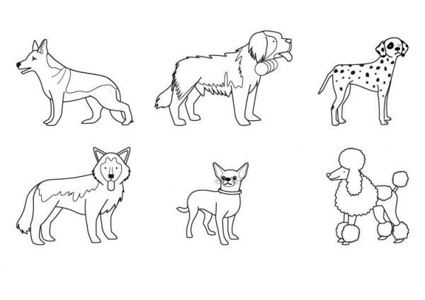 Mandalas De Perros Debuda Net Con Dibujos Para Colorear De: 60 Imágenes De Animales Para Colorear Dibujos