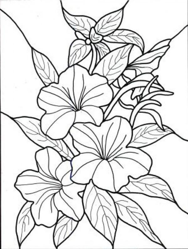 Tropical Flower Line Drawing : Imágenes de flores para colorear dibujos