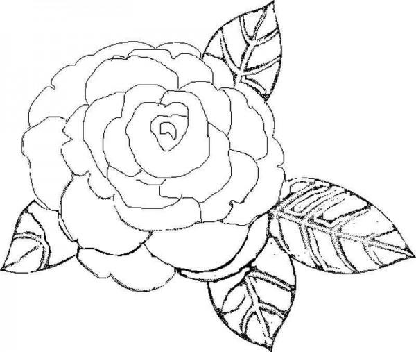 60 Dibujos De Flores Para Colorear Colorear Imágenes