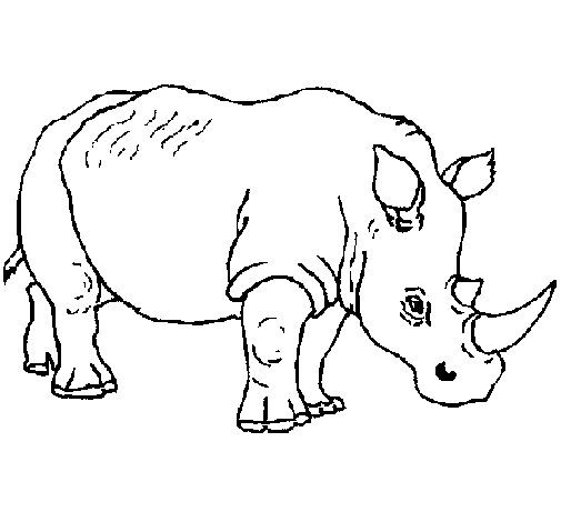 60 Imágenes De Animales Para Colorear Dibujos Colorear Imágenes